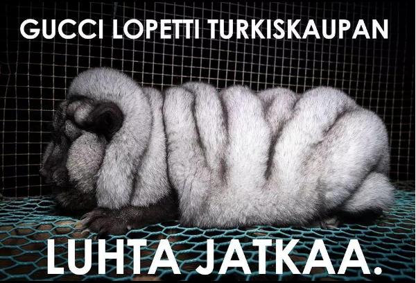 Oikeutta eläimille -järjestö on julkaissut tänä vuonna kuvia turkistarhoilla salaa kuvatuista siniketuista. Superketuiksi nimetyt, järkyttävät löysänahkaisiksi ja tuuheiksi jalostetut ketut ovat herättäneet huomiota ympäri maailmaa. KUVA & MEEMI: OE
