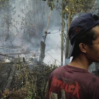 Sademetsän tuho on elämäntavan tuho