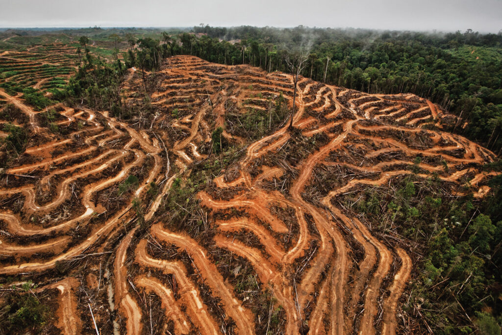 Trooppisten metsien raivaus plantaaseiksi kivennäismailla (kuva) ja soilla on yksi suurimpia metsäkadon syitä. Palmuöljyplantaasi vuonna 2014 maailman kolmanneksi suurimmalla saarella, Borneolla, Keski-Kalimantanin provinssissa. Alue on osa orankien kutistuvaa elinaluetta. 1600-luvulla hollantilaiset ja brittiläiset kilpailivat saaren herruudesta, mutta joutuivat sotimaan saaresta parin sadan vuoden ajan sekä toisiaan, että paikallisia vastaan. Nykyään saari on jaettu kolmen valtion kesken, Indonesian, Malesia ja Brunein.
