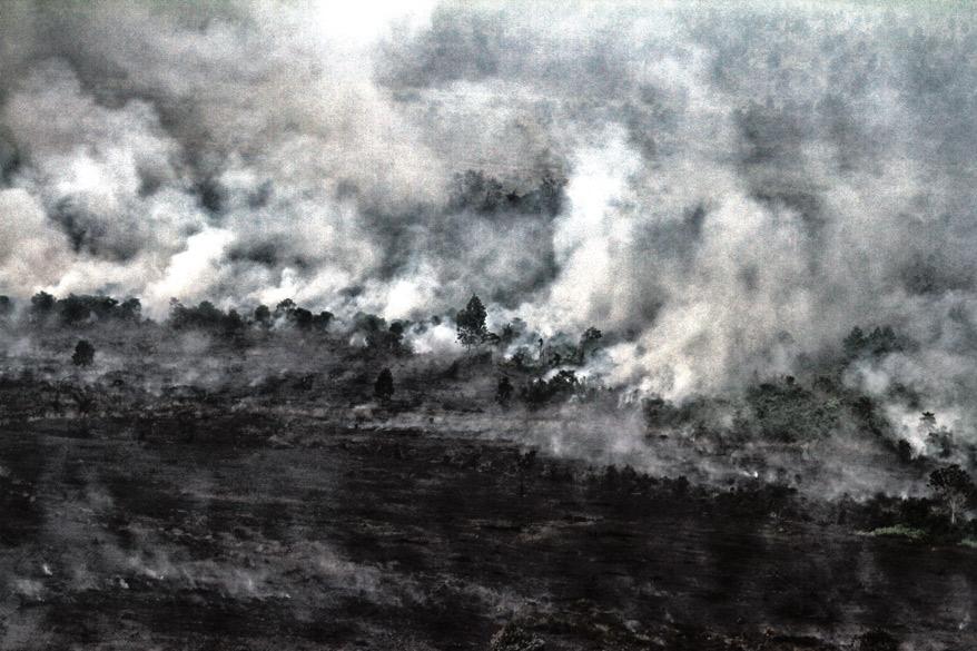 Palanutta metsää vuonna 2015 Indonesian Länsi-Kalimantanissa. KUVA: Ulet Ifansasti/GP