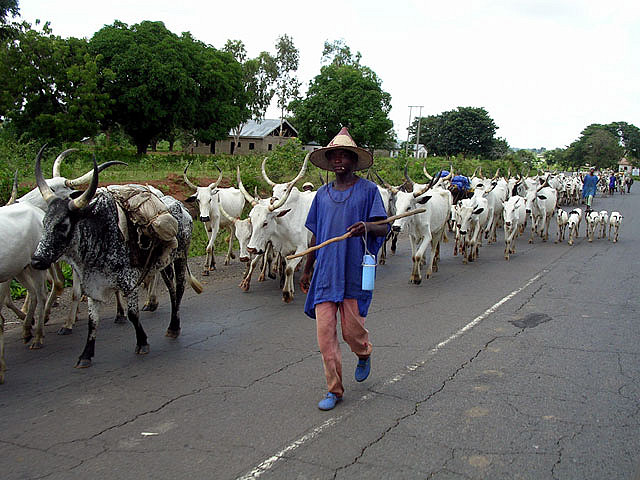 Paimenet ovat joutuneet kuivuuden vuoksi siirtämään laumojaan uusille asuinalueille, mikä on aiheuttanut tiiviisti asutussa Nigeriassa jopa aseellisia konflikteja.