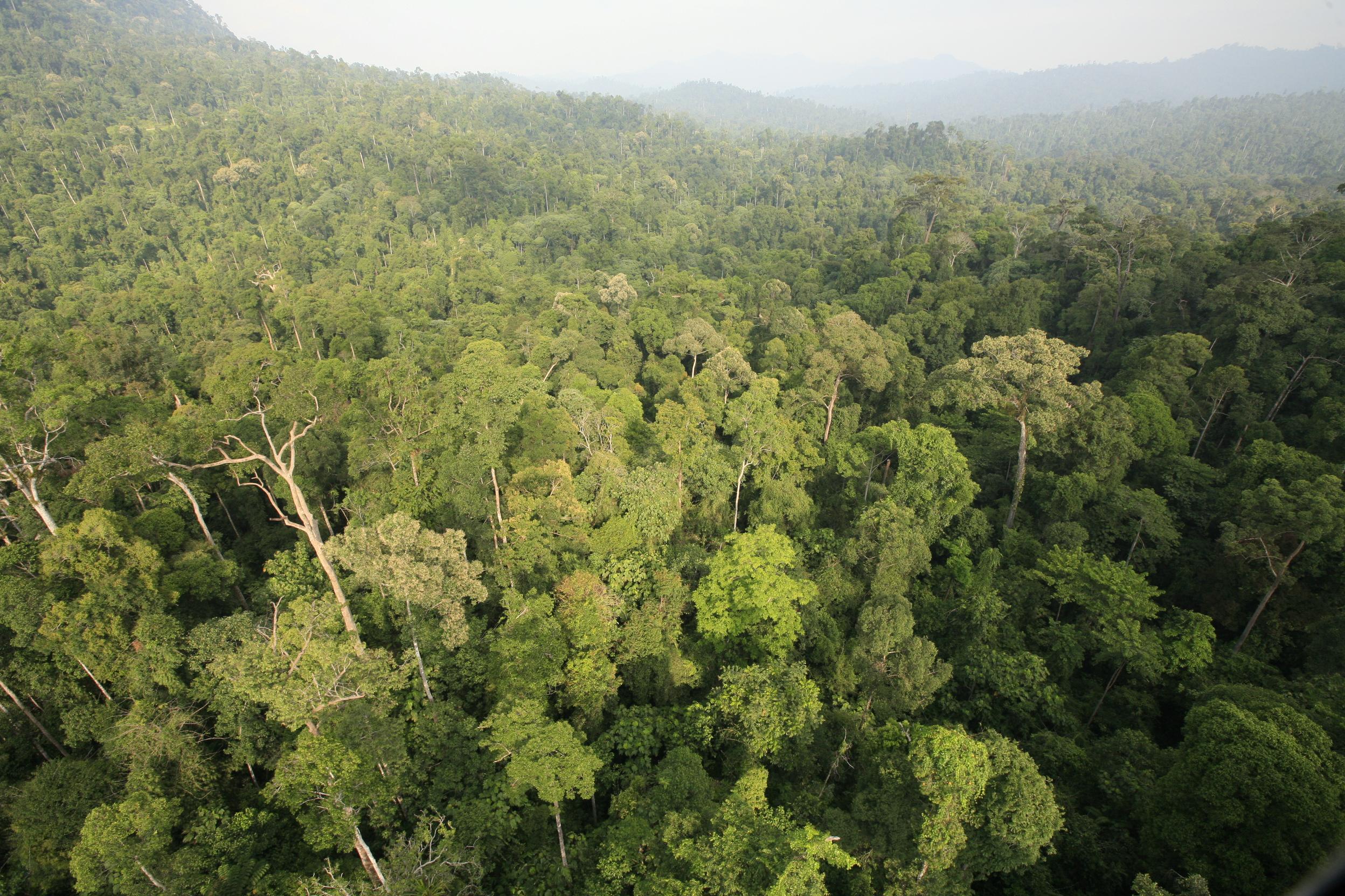 Malesiassa on maailman monimuotoisimpiin kuuluvia luontoalueita, joissa asuu muun muassa tapiireja, tiikereitä ja elefantteja. Monet näistä alueista ovat jatkuvasti uhattuna kaupunkikehityksen ja maatalouden kasvun vuoksi. Kuva: WWF-Malaysia / David James