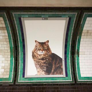 Vaihdetaan mainokset kissakuviin