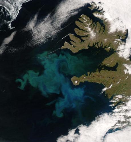Maailman ekosysteemi järkkyy valtamerissä