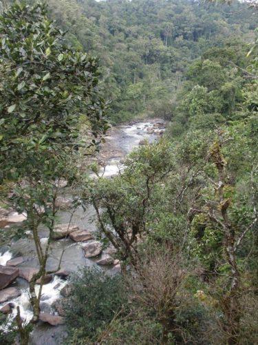 Kultakuume tuhoaa kansallispuistoja