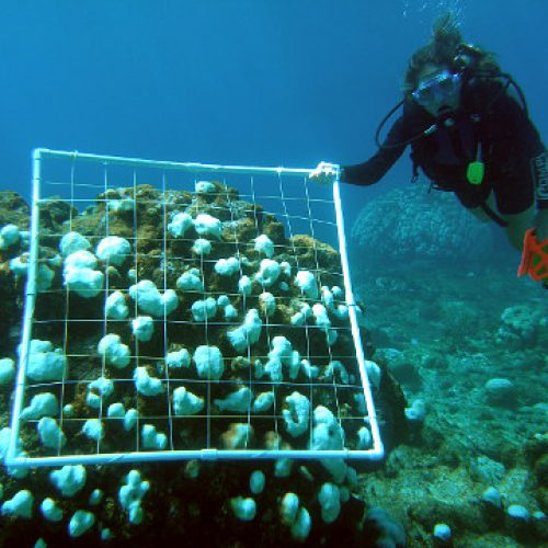 Karibian kalpeat korallit