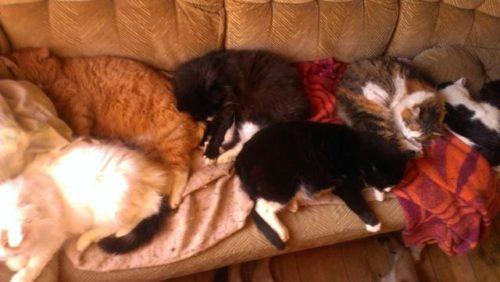 Minä ja 40 kissaa