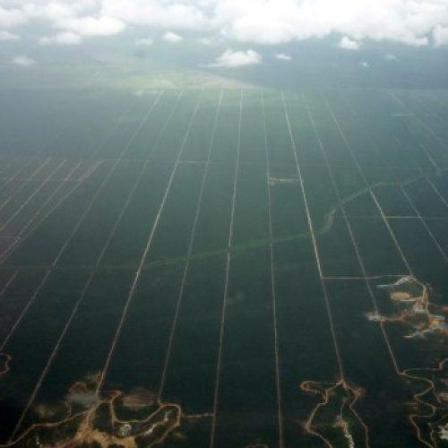 Trooppisten metsien tila