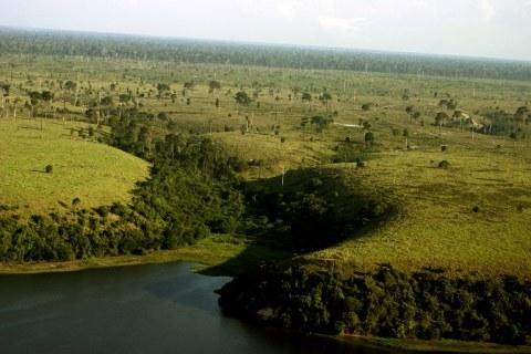 Amazonin sademetsän tulevaisuus on nyt