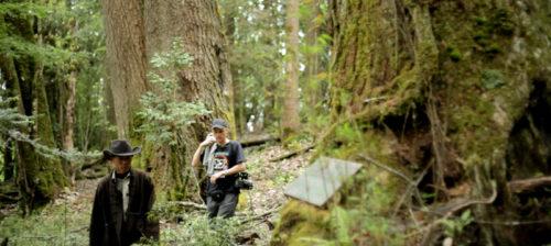 Metsäteollisuuden mustat jäljet