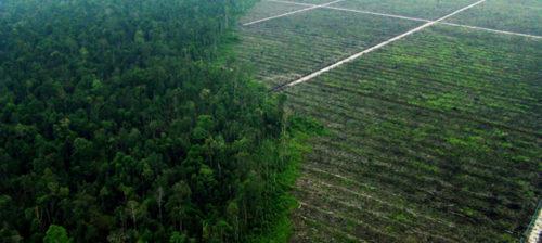 Lautasellinen Indonesian palmuöljyä