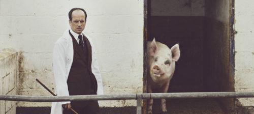 Yksi sika, yksi elämä & yksi levy