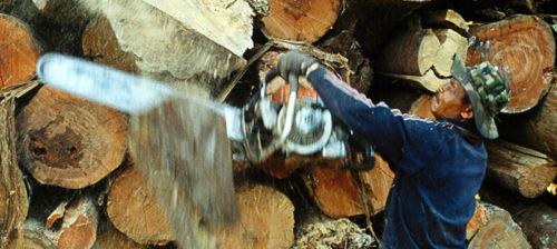 Kuka kaataa Indonesian metsät?