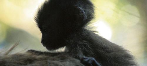 Opettele olemaan apinoiksi