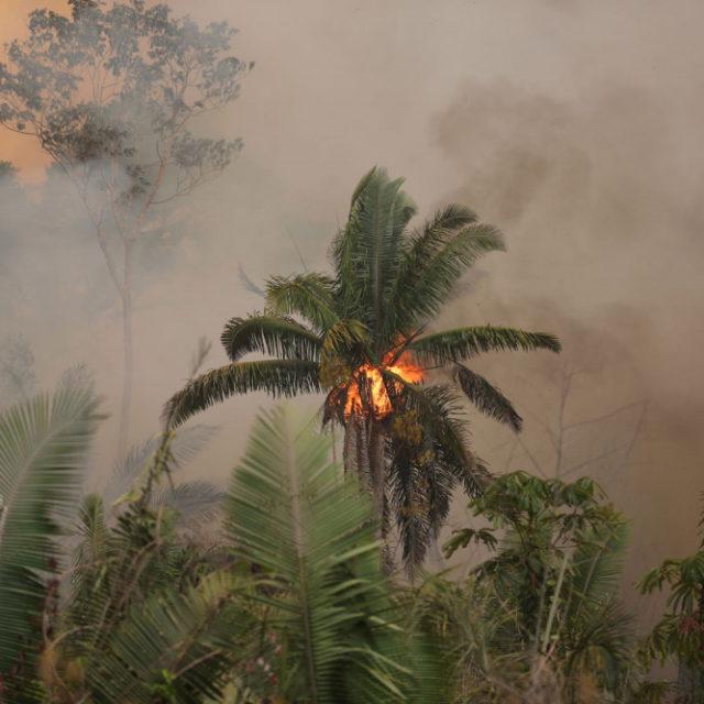Sademetsien palaminen on osa Brasilian tuhopolitiikkaa