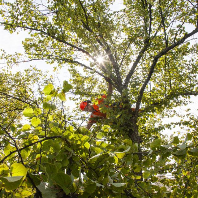 Puiden kaupunki - puut tekevät metsän mutta ne ovat irrotamaton osa myös kaupunkiympäristöä