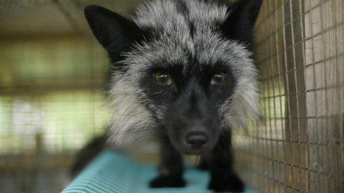 Animalia PKS esittää: Inside Fur
