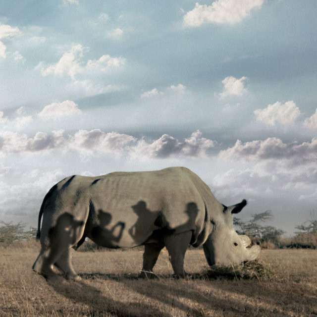Moni DocPointin dokumenttielokuva kertoo eläimistä, mutta paljastaa samalla paljon myös ihmisistä