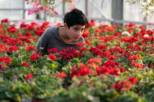 Nuori poika punaisten kukkien keskellä, tarkkailee jotain kauempana olevaa.