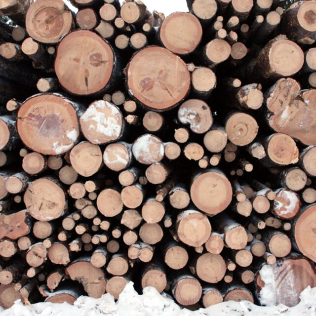 Voima 20 vuotta sitten: suomalaiset metsäjätit muuttivat sademetsää selluksi