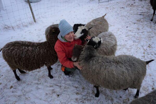 Reija Rantakallio lampaiden ympäröimänä, lunta maassa