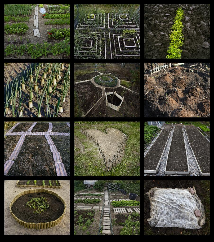 Kollaasi kuvista kasvimaalta. Kuvissa eri vihanneksia ja kasveja viljelynä.